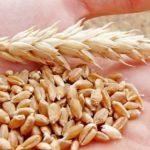 Индекс цен на зерновые от ФАО в апреле снизился