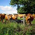 Казахстанским фермерам предоставят льготные кредиты в рамках мер господдержки