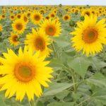 4 млн га засеют на средства форвардного закупа сельхозпродукции