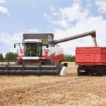 Цены на зерно растут на начальных результатах уборочной страды и ближайших прогнозах погоды