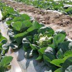 Аграрии Туркестанской области экспортировали первый весенний урожай