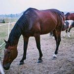 Как казахстанской конине найти путь на экспортные рынки