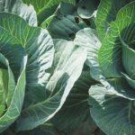 Блогер, заявивший о помехах отправке овощей с юга, встретился с представителями Минсельхоза