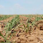 В Казахстане начнут выпускать стимуляторы роста растений