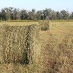 Контроль за использованием сельхозземель планируют ужесточить