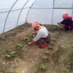 Центральноазиатские страны делятся опытом борьбы с пандемией и мер политики в области продовольственной безопасности