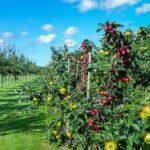 Есть ли субсидии на закладку яблоневого сада?