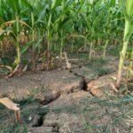 Казахстанские фермеры теперь могут защититься от последствий засухи с помощью спутников