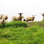 Программа «Еңбек»: 4 млрд тенге направят на кредитование фермеров ЗКО