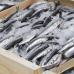Қазақстан биыл Ресей, Украина, Әзербайжан мен Израильге 4069 тонна балық экспорттады