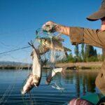 ФАО организовала вебинар по проблемам рыболовства и аквакультуры в условиях изменения климата