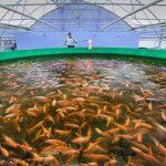 Управление рыболовством работает – настало время расширять его применение