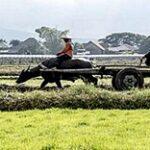 Биыл жаһандық азық-түлік нарықтары тұрақсыздыққа дайындалуда, дейді ФАО