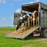 Субсидируется ли приобретение скотовозов?