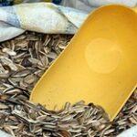 В июле-августе в ЕЭС будет действовать особый режим экспорта семян подсолнечника