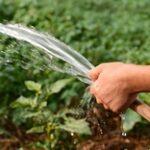 Из-за нехватки воды гибнет урожай в Алматинской области