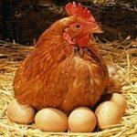 Без субсидий продукция птицеводства продолжит подниматься в цене
