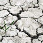Рисоводы и крестьяне РК испытывают дефицит воды
