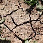 Президент НСА Корней Биждов: регионам Западной и Южной Сибири угрожает засуха