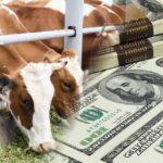 Всемирный банк решил выдать Казахстану $500 млн на развитие животноводства