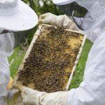 В НАО «НАНОЦ» создан отдел пчеловодства