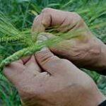 Финансирование аграрной науки увеличили более чем вдвое в Казахстане