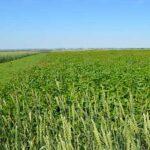 Открыли сельскохозяйственный производственный кооператив, обязательно ли иметь земли для получения спецрежима?