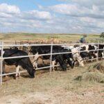 В Акмолинской области внедрены инновационные технологии в животноводстве