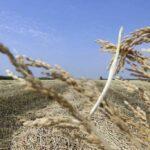 Фермеры против утильсбора на сельхозтехнику