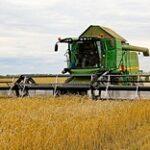 Уборка в отдельных агроформированиях СКО уже началась