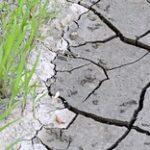 Засуха в Казахстане: Аграрии получили более 535 млн тенге страховых выплат