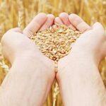 Продкорпорация активизирует закуп сельхозпродукции в Казахстане