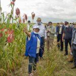 Дни поля прошли в Алматинской области 15 и 17 сентября (ВИДЕО)