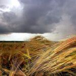 Дождливый сентябрь прогнозируют синоптики в зерновом поясе Казахстана