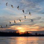 В северных регионах Казахстана по маршруту перелётных птиц проведут вакцинацию против ВПГП – МСХ