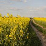 В Алматинской области займутся выращиванием озимого рапса