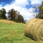 Фермеры ВКО опасаются нехватки кормов