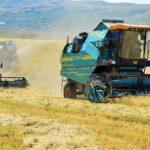 В Алматинской области убрано более 70% зерновых культур