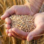 Сапархан Омаров: Урожай этого года характеризуется очень высоким качеством