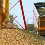 В КТЖ готовятся к перевозке зерна нового урожая
