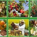 Проект по кооперации личных подсобных хозяйств стартовал в Казахстане