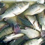Производство рыбной продукции в Казахстане выросло сразу втрое