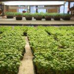 Сколько инвестиций требуется для запуска сити-фермы?