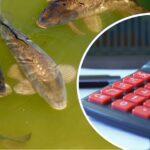 Отечественный Минсельхоз планирует увеличить субсидирование рыбоводства
