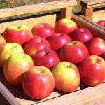 Топ-10 проблем интенсивного садоводства и яблочного бизнеса Узбекистана, Казахстана и других стран региона