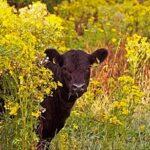 Вопросы по работе ИСС животноводства
